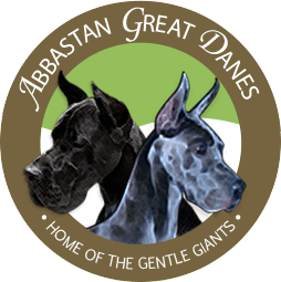 Abbastan Great Danes